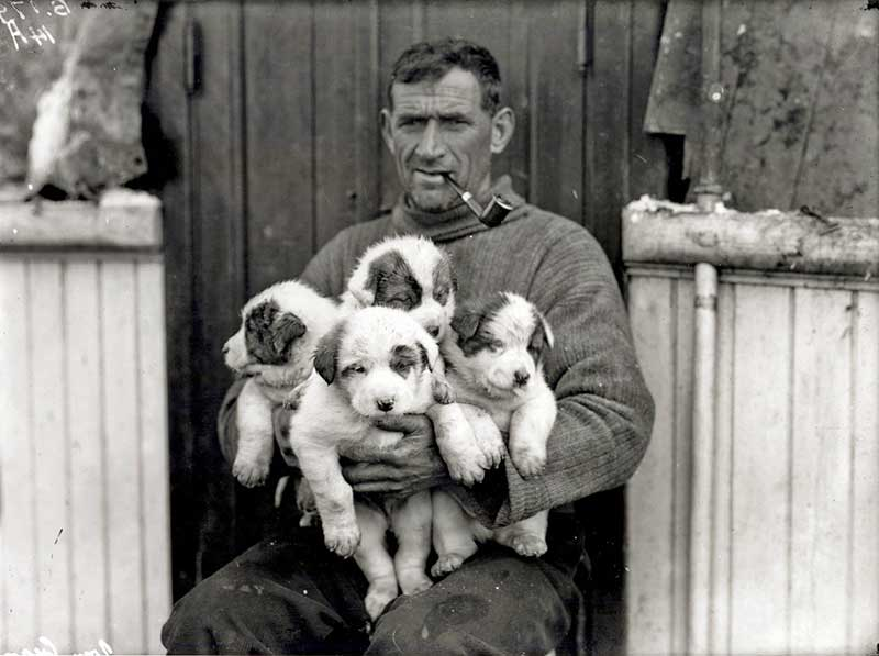 Tom Crean with his Litter of puppies born aboard the HMS Endurance (January 1915) polar expeditions.
