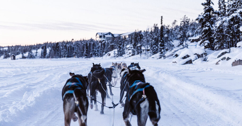 Dog Sledding in Canada