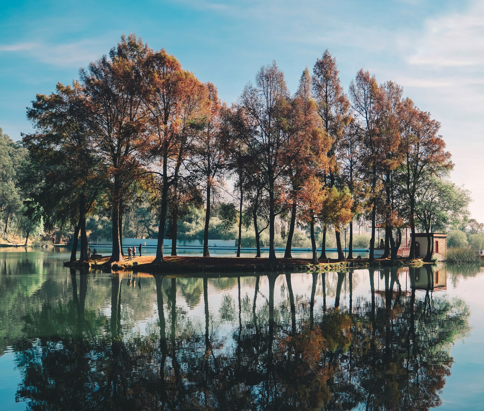 trees on an island with reflection